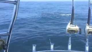 Bluefin Tuna Frenzy - Country Girl Charters