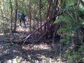 foto penangkapan perkosaan di hutan Borwap