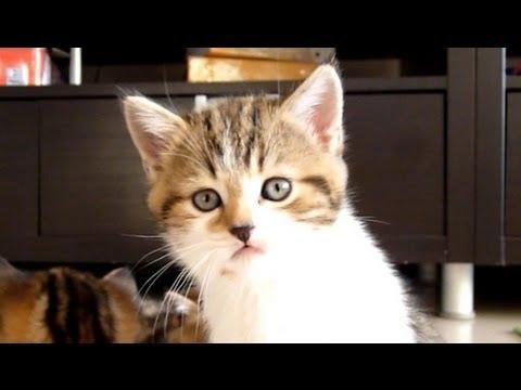 il-gattino-col-singhiozzo-48