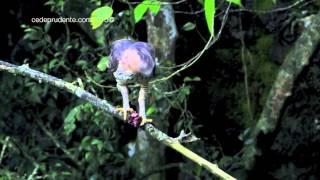Video Birds of Borneo MP3, 3GP, MP4, WEBM, AVI, FLV Agustus 2019