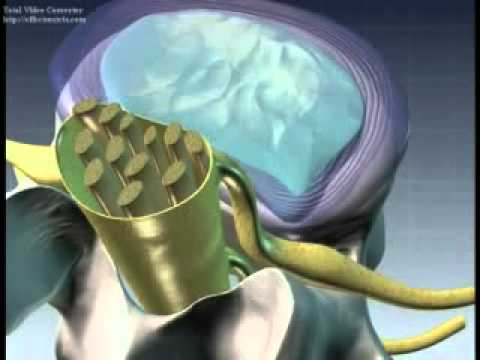 nukleoplasti-animasyon