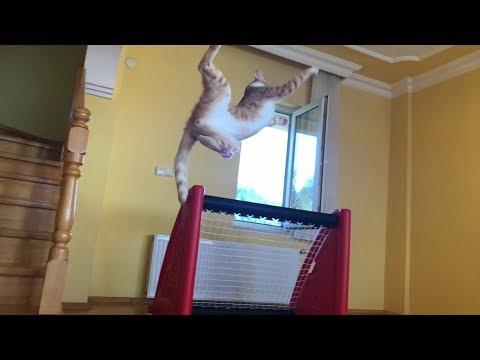 Η γάτα... τερματοφύλακας