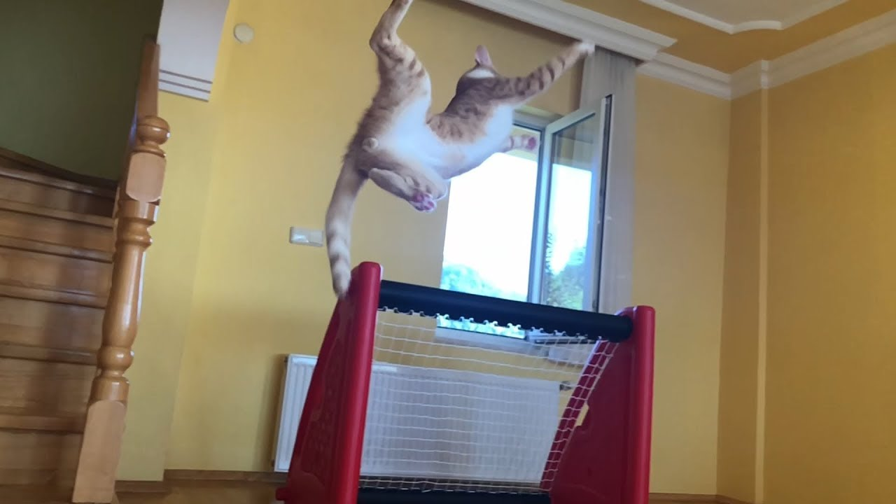 Goalkeeper Cat Tries His Luck at Basketball – Amazing Blocks, Defence & Fails!
