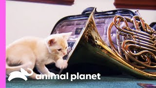 Musical Kitten Puts On A Performance For Her Family | Too Cute! by Animal Planet