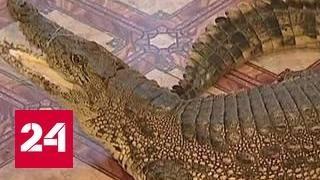 В Москве ужесточат требования к содержанию диких животных