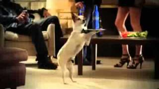 Quang cao - Super Bowl 2011 Commercial - Bud Light Dog Sitter