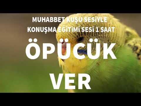 Video hızlı muhabbet kuşu konuşturma