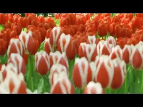 Kouzelná zahrada Keukenhof