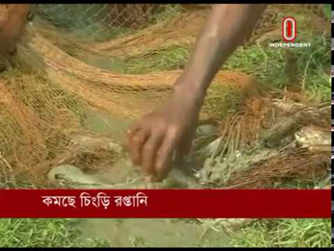 Bangladesh lags in shrimp export (15-01-2019) Courtesy: Independent TV