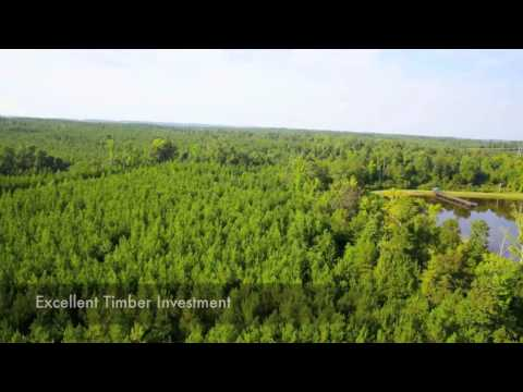 744 acres Linden, AL