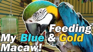 FMPF: My macaw is a little spoiled... by Snake Discovery