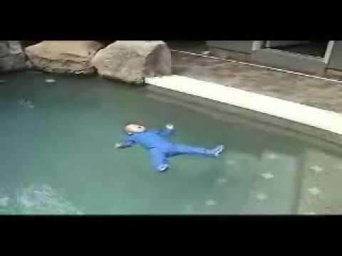 un bambino cade in piscina: quello che succede dopo vi sorprenderà!
