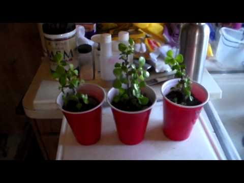 Plant Growth Experiment