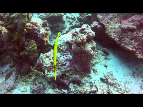 Vidéo Plongée Similan Island