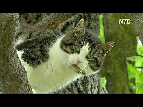 Кот 6 лет живёт на дереве
