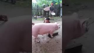 Nonton Aksi Sadis Bacok Babi  Wajibnonton Film Subtitle Indonesia Streaming Movie Download