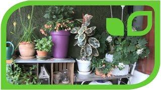 Lubera Pflanzen auf Sabine Rebers Balkon