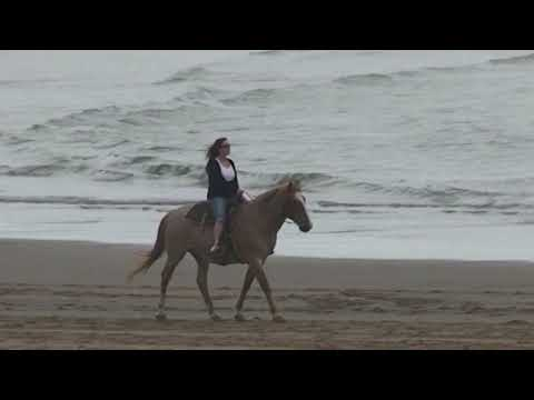 Canon Beach Oregon Horseback Riders