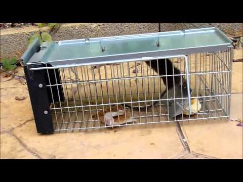Trampa para ratas jaula trampa para ratas el cazador - Trampas para ratones vivos ...