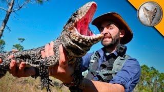Video Reptilian Invaders in Florida! MP3, 3GP, MP4, WEBM, AVI, FLV Agustus 2018