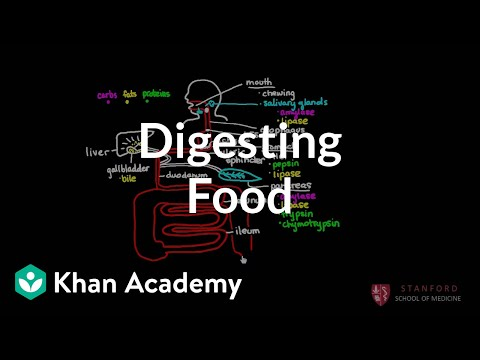 Digesting Food Video