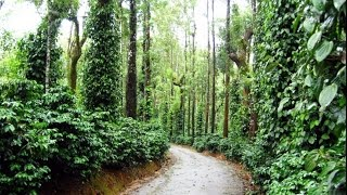 Coorg India  city pictures gallery : Coorg The Scotland of India, Kodagu, Karnataka