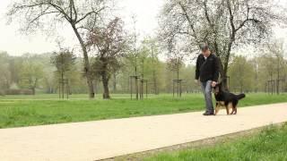 Chůze bez vodítka