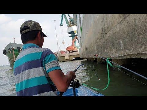 Trúng ổ cá ngát rồi, cong cần sướng tay với con cá ngát chà bá | Săn bắt SÓC TRĂNG | - Thời lượng: 33 phút.