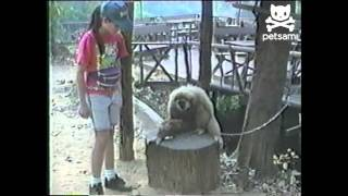 Monkey demands that girl scratches its head