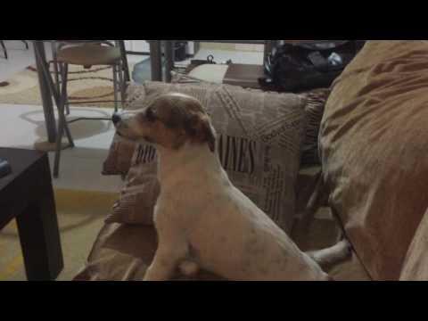 Pies ogląda ze swoim Panem horror. Gdy zobaczysz jego reakcję na straszną scenę, pękniesz ze śmiechu!