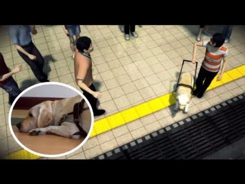 民眾跺腳嚇導盲犬 主人掉下月台