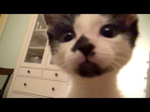 come-filmare-il-vostro-gatto