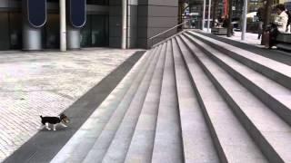 Cachorro achou uma maneira de se divertir sozinho