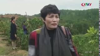 Phóng sự về trang trại cam Hoành Bồ