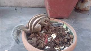 Video Mommy Squirrel finds out her baby is safe Watch what happens next! MP3, 3GP, MP4, WEBM, AVI, FLV Februari 2018