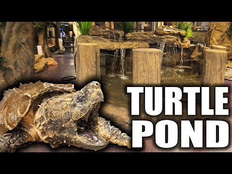 ALLIGATOR SNAPPING TURTLE POND!!! | The king of DIY_Akvárium