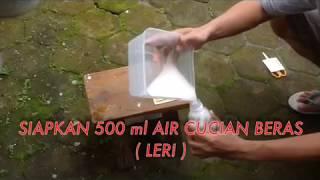 Video MANFAAT AIR CUCIAN BERAS UNTUK PUPUK ORGANIK CAIR MP3, 3GP, MP4, WEBM, AVI, FLV September 2018