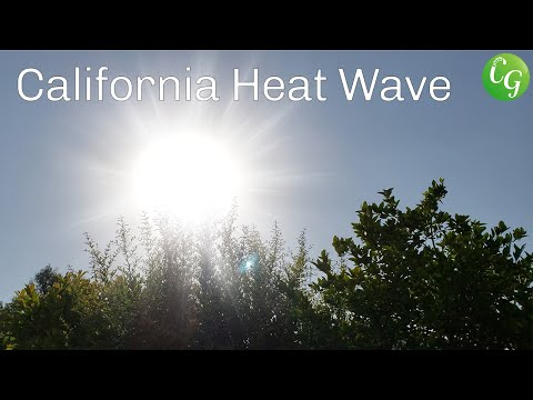 California Heat Wave - How To Protect Your Garden Plants From Heat