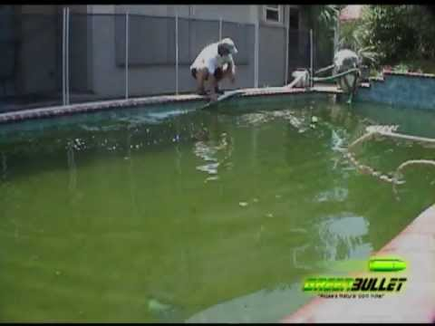 Time Lapse of Applying Green Bullet to Pool
