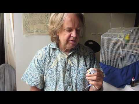 Birds Budgie Cancer Part 2 with Dr Ross Perry