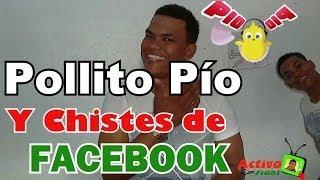 El Pollito Pío (Versión Real) Y Chistes De Amigos De  Facebook