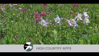 Colorado Rocky Mtn Wildflowers YouTube-Video