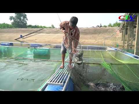 Hỗ trợ xây dựng mô hình nuôi cá chép giòn trong lồng
