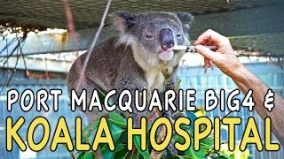 Port Macquarie Australia  City new picture : Port Macquarie, Australia Koala Hospital & Big4 Holiday Park