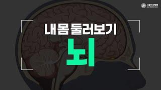 뇌 미리보기
