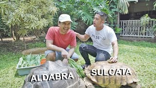 Video BELAJAR MEMELIHARA KURA-KURA (FEAT. IRFAN HAKIM) MP3, 3GP, MP4, WEBM, AVI, FLV Maret 2019