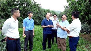 Đoàn công tác TP Uông Bí học tập kinh nghiệm kỹ thuật trồng và chăm sóc cây Mắc ca tại huyện Thạch Thành, tỉnh Thanh Hóa