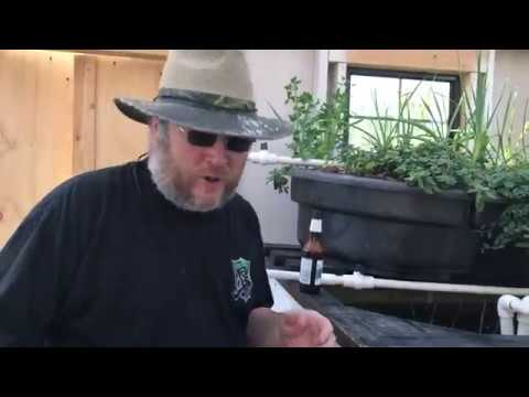 Stocking the Aquaponics System with Locally Caught Fish