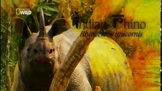 Documentário Animal - Vida Selvagem