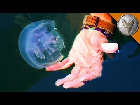 Jellyfish Challenge!